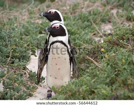 Two penguins standing on the beach