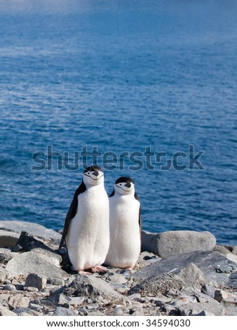 two penguins standing side by side