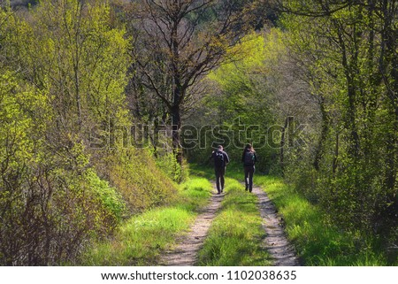 Two people walking on a forest path