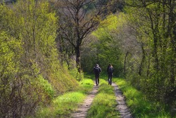 Two people walking on a forest path in the early springtime; trees with light green leaves