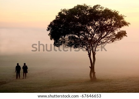 Two people walking past a tree on an early misty morning
