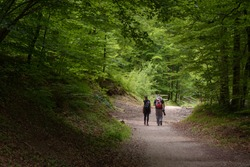 Two people walking through a green forest, summer activities in the mountains