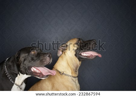 Two Pet Dogs Sitting and Panting