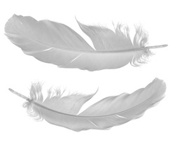 two pigeon feathers isolated on white background