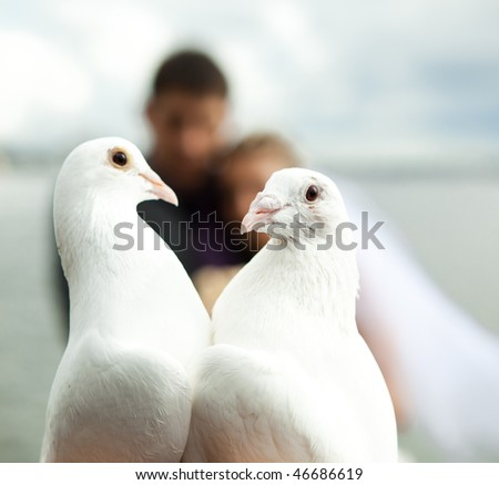 two pigeons and newlyweds as the background