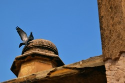 two pigeons on old historic wall with wings up and flying