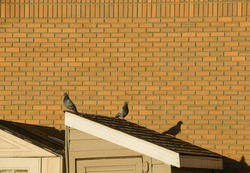 two pigeons sitting on slanted roof top of shack against exterior red brick wall one pigeons shadow is cast on the wall horizontal format room for type empty brick wall in background