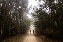 Two pilgrims are walking between eucalyptus trees along the Camino de Santiago or St James pilgrimage way in Spain in a misty day