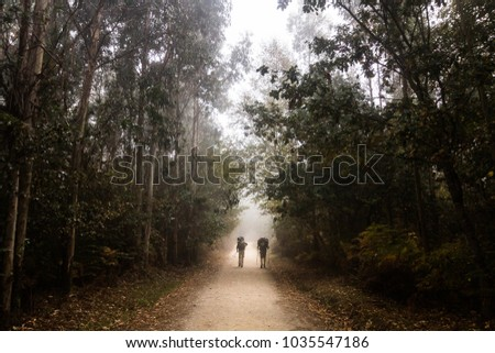Shutterstock Two pilgrims are walking between eucalyptus trees along the Camino de Santiago or St James pilgrimage way in Spain in a misty day