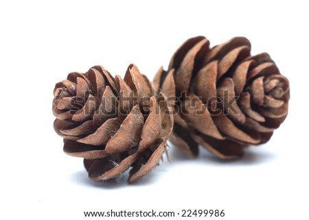 Two pine cones on white