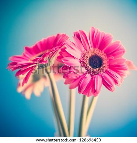 stock photo two pink flowers 128696450 - Каталог — Фотообои «Цветы»