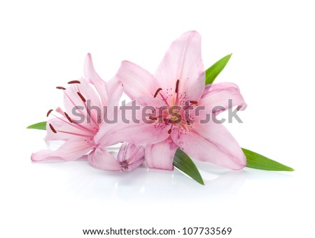 Two pink lily flowers. Isolated on white background #107733569