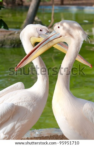 Two pink pelican lovers make the heart
