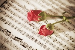 Two Pink roses on sheets of musical notes close up