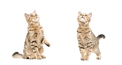 Two playful cats, looking up, isolated on white background