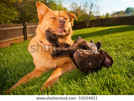 Two playful dogs chilling in the yard.