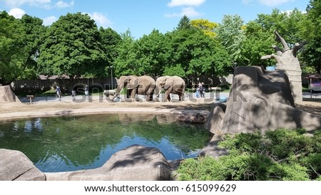 Two Playful Elephants in a zoo #615099629