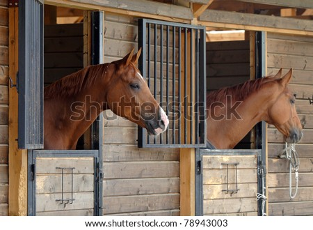 Two polo pony's in stable