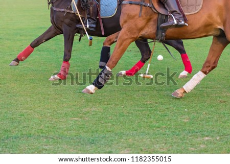 Two pony polos black and red in horse equipment play a horse polo in the summer. Riders in leather boots with spurs for riding and a club for a game. A ball between legs of horses Zdjęcia stock ©