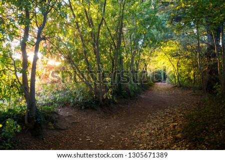 Two possible paths in the woods with bright sun light on green and yellow leaves in autumn at sunset close the Lez river in Agropolis in Montpellier, France, it can symbolize a tough choice Stock fotó ©