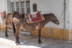 Two postal mules resting in shade on Greek island where there are no cars