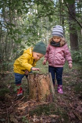 Two preschool children exploring forest, in autumn clothing, playing and learning in nature, alternative learning methods, homeschooling