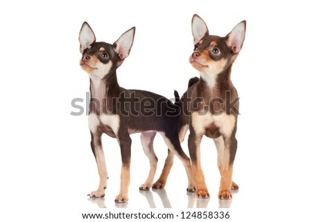 two puppies looking standing close