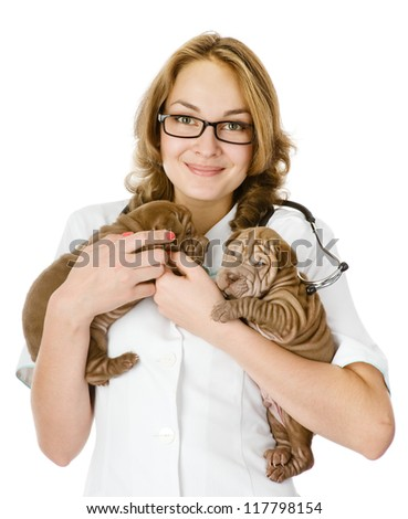 two puppies sharpei dog  on hands at the veterinarian. isolated on white background