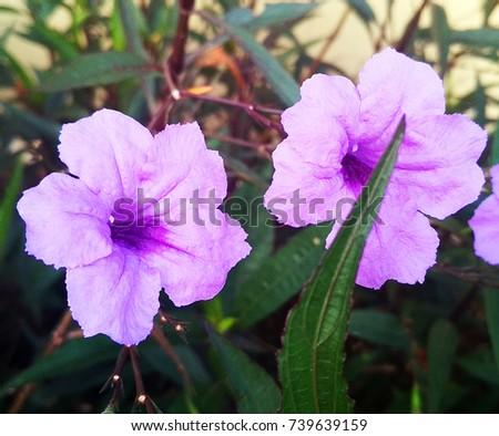 Two Purple flower - Shutterstock ID 739639159