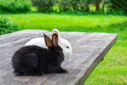 Two rabbits are sitting next to looking into the distance. Black and white rabbit on a wooden table against the blurred background of a green lawn. Valente or Easter day and spring concept. Copy space