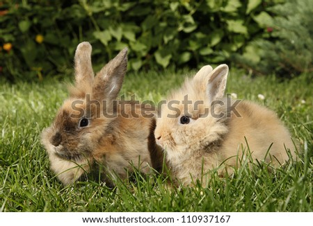 Two rabbits bunnies