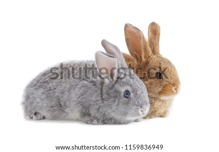two rabbits isolated on white background