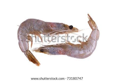 two raw and fresh prawn isolated on white