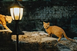 Two red cat under the street lamp in the old town