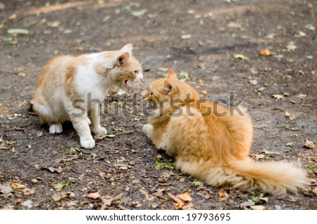 two red cats fight - stock photo