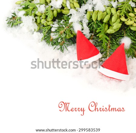 Two red Christmas caps on branches of a Christmas tree and other coniferous plants on a white background. A Christmas background with a place for the text.