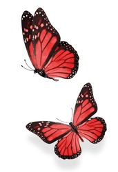 two red  colored butterflies isolated on a white background