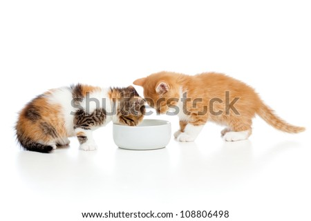 two red kittens lap milk from bowl