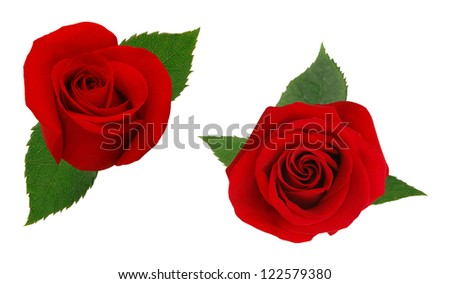 Two red rose. Isolated on white background.