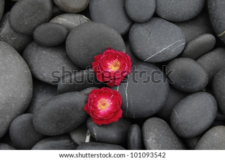 Two red rose on beach pebbles - stock photo