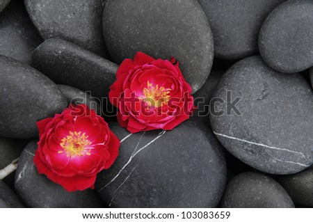 Two red rose on beach pebbles texture
