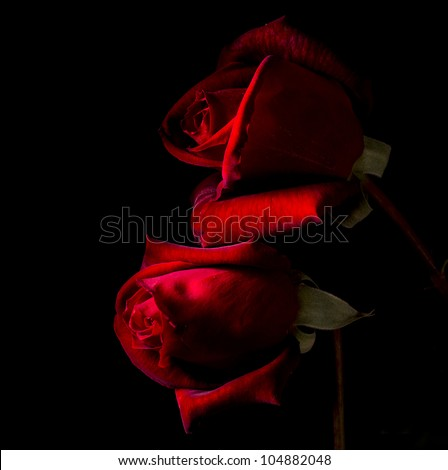 Two red roses in black back blackground
