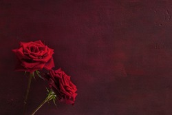Two red roses lie on dark red wooden background. Flat lay