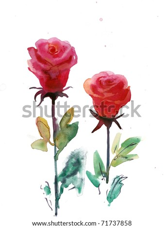 two red roses. watercolor