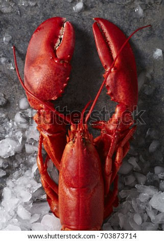 Two red steamed Maine lobsters on ice