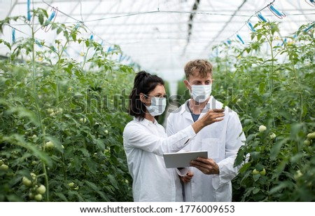 Two researches man and woman examine greenery with a tablet in an all white greenhouse ストックフォト ©
