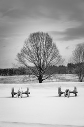 Two Revolutionary War cannons and a large tree in a snow covered field.  Valley Forge National Park