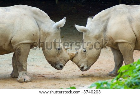 two rhinos - stock photo