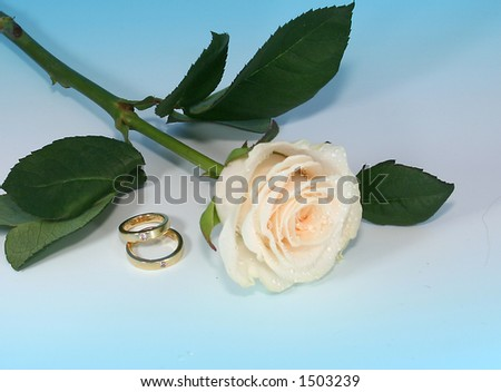 Two Rings With White Rose
