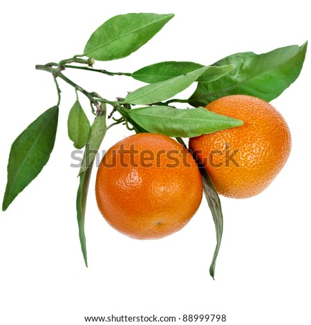 two ripe tangerines with leaves isolated on white background